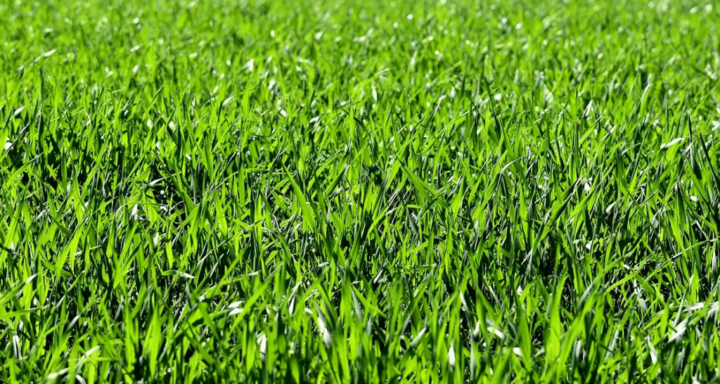 Comment rendre son herbe plus verte