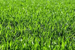 Comment rendre son herbe plus verte ?