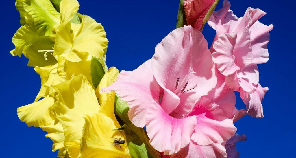 Meilleures plantes à planter au printemps