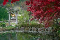 Quelques idées pour décorer le bassin de votre jardin dans un style japonais